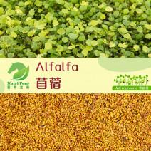Alfalfa Microgreens Seeds
