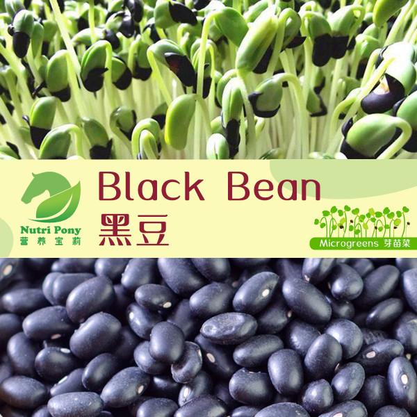 Black Bean Microgreens Seeds