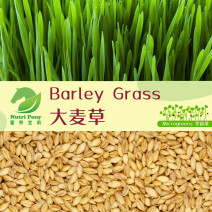 Barley Grass Microgreens Seeds