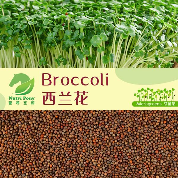 Broccoli Microgreens Seeds