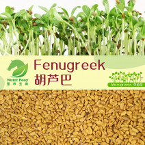 Fenugreek / Methi Microgreens Seeds