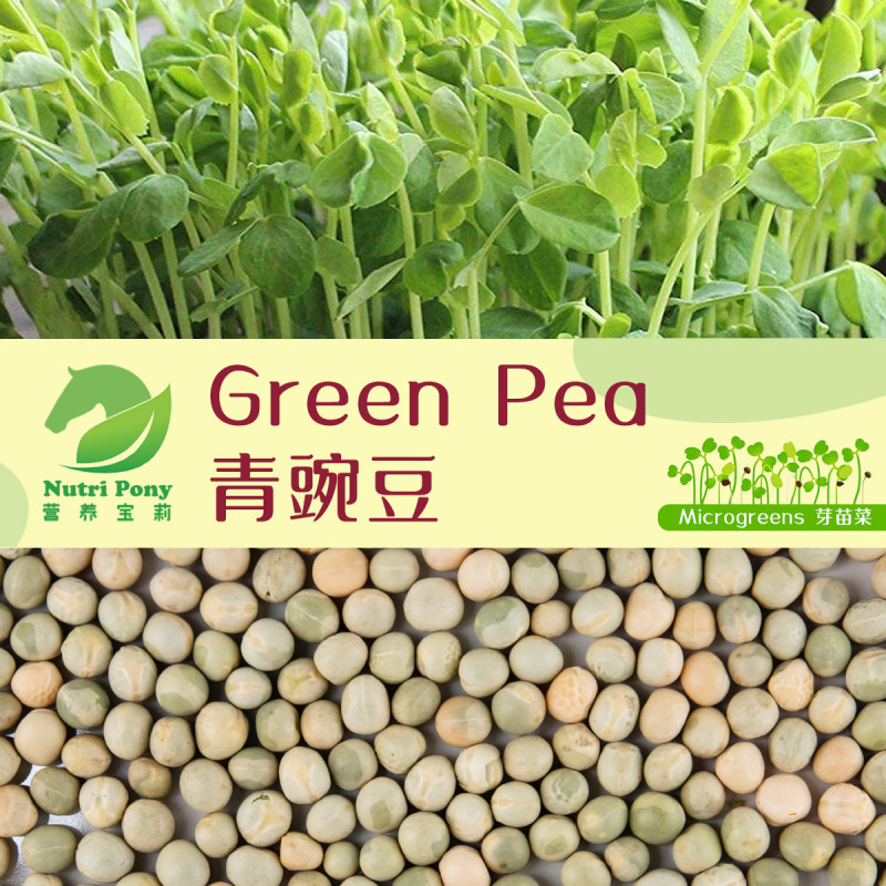 Green Pea Microgreens Seeds