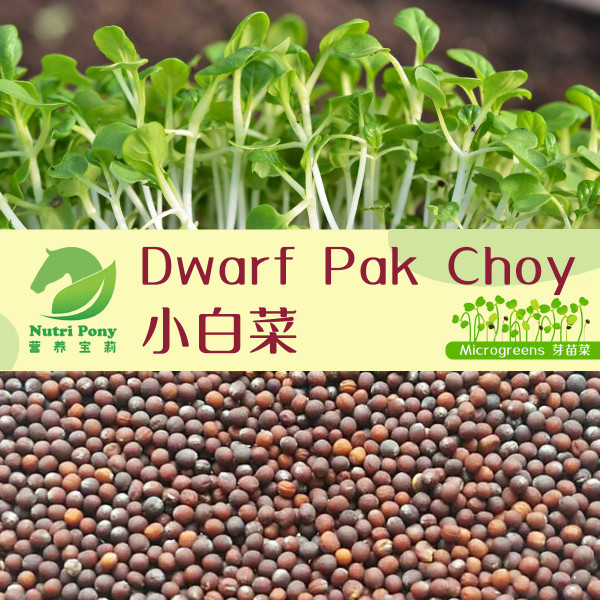 Dwarf Pak Choy Microgreens Seeds