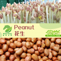 Peanut Sprouts Microgreens Seeds