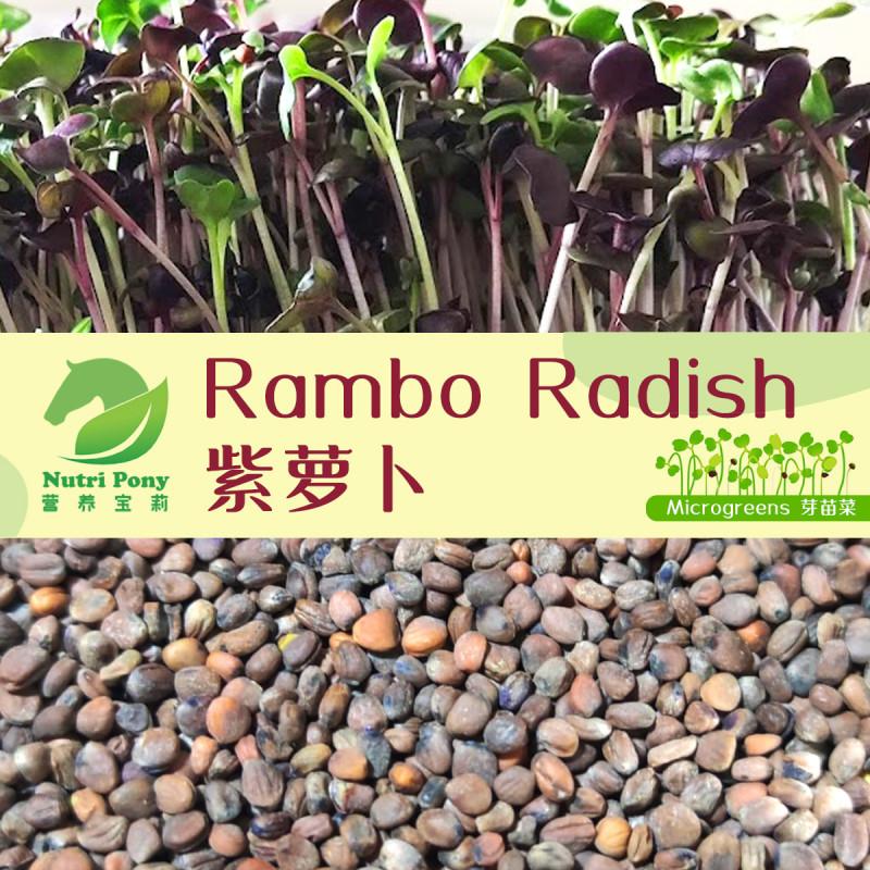 Rambo Radish Microgreens Seeds