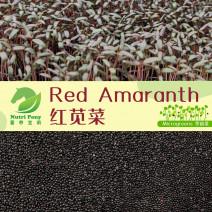 Red Amaranth Microgreens Seeds