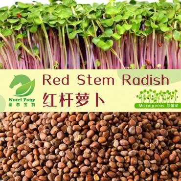 Red Stem Radish Microgreens Seeds