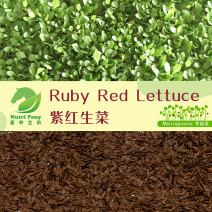 America Ruby Red Lettuce Microgreens Seeds