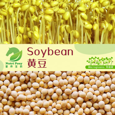 Soybean Microgreens Seeds