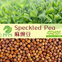 Speckled Pea Microgreens Seeds