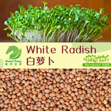 White Radish Microgreens Seeds